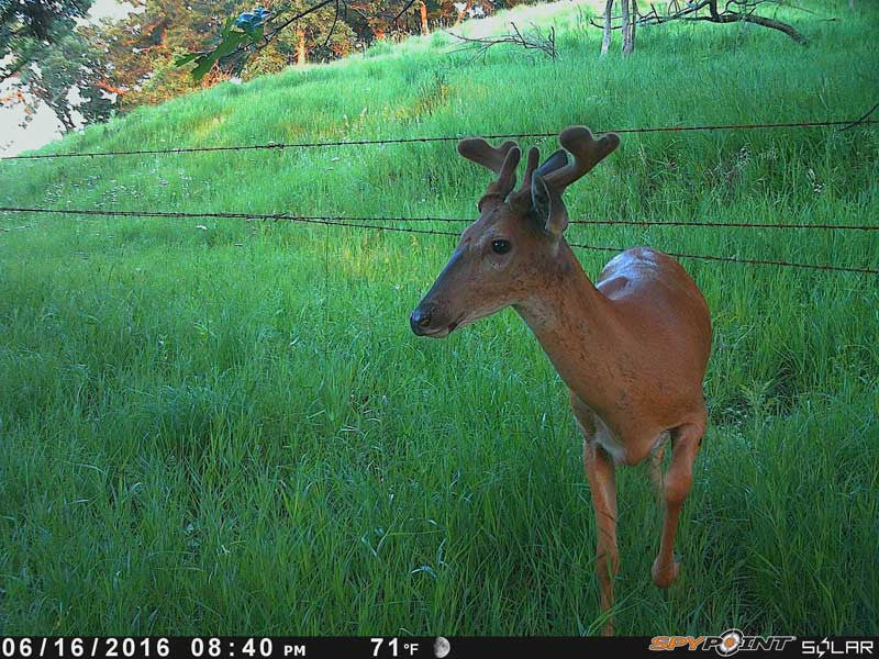Year in Review | Spypoint Trail Cameras
