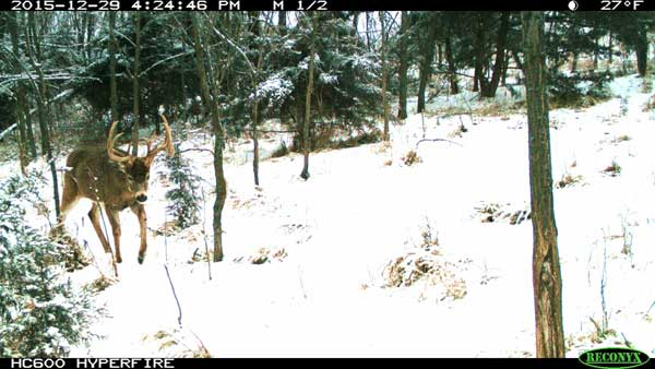camera trap pictures
