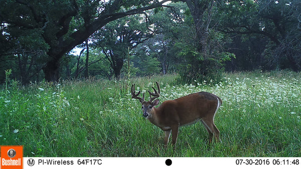 Picture from cellular trailcam