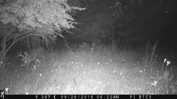 Night IR picture from Browning trailcam