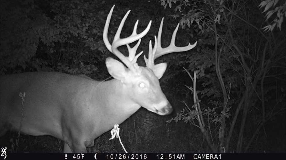 "Using trail cameras to find bucks width=""1000"" height=""563"""