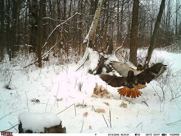 cold weather trail camera picture