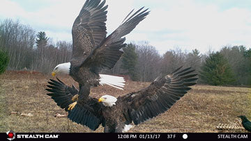 Stealth Cam Eagle Photo