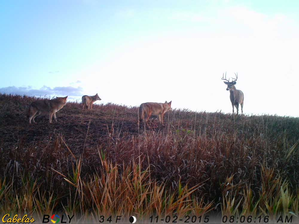 trailcam photo contest winner