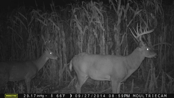Moultrie game camera picture