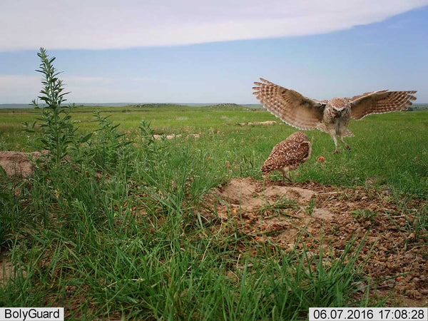 wildlife bird cameras