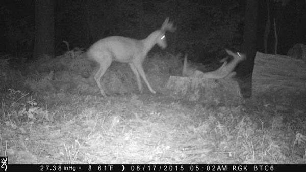 Doe falling after fight