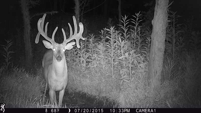 infrared trail camera pictures