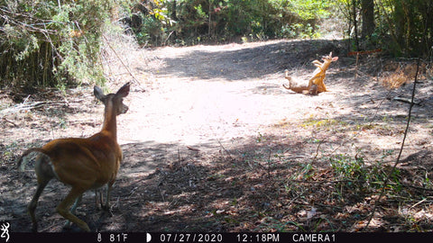 trailcampro us and canada winner