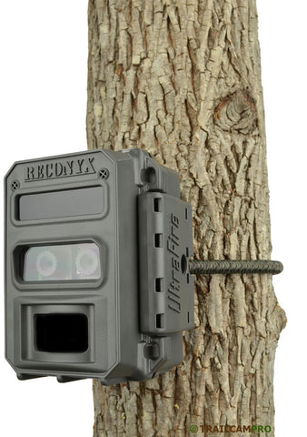 reconyx xr6 on a tree