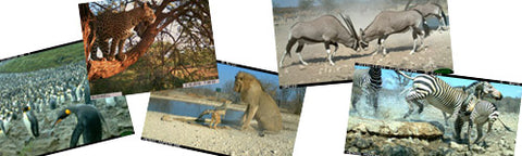 camera trap photos