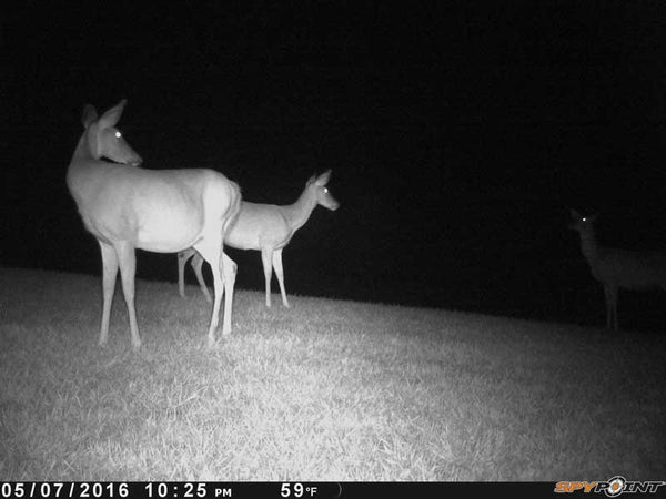 IR trailcam picture from Spypoint
