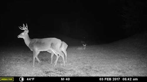 "Trail cameras used to track bucks width=""500"" height=""281"""