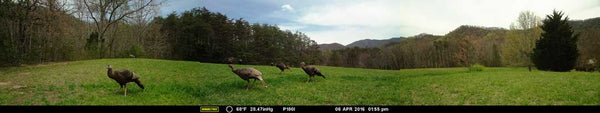 panoramic trailcam photo