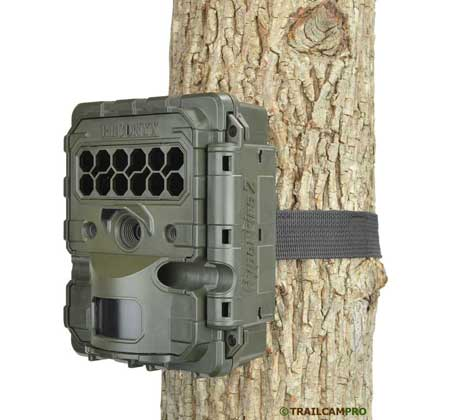 Reconyx Hyperfire 2 on a tree