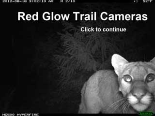 Red Glow Trail cameras