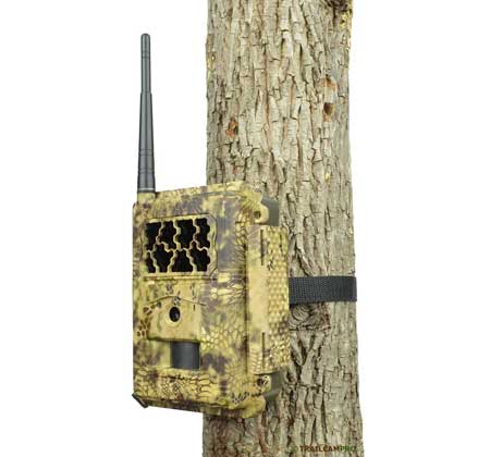 US Cellular trail camera review