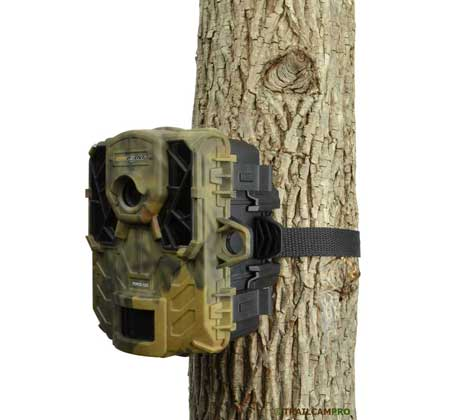 spypoint force 11d on a tree
