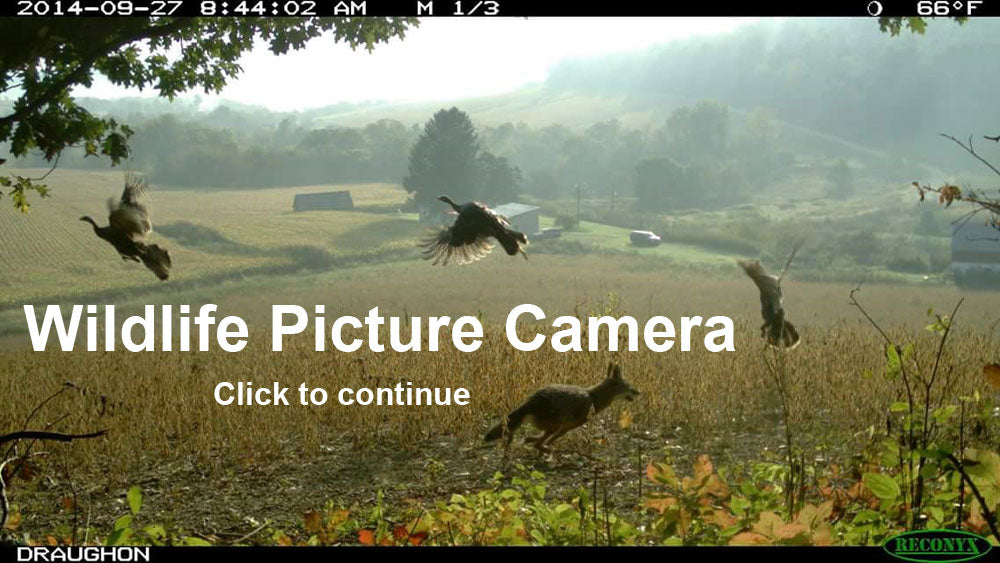 Wildlife Picture Cameras