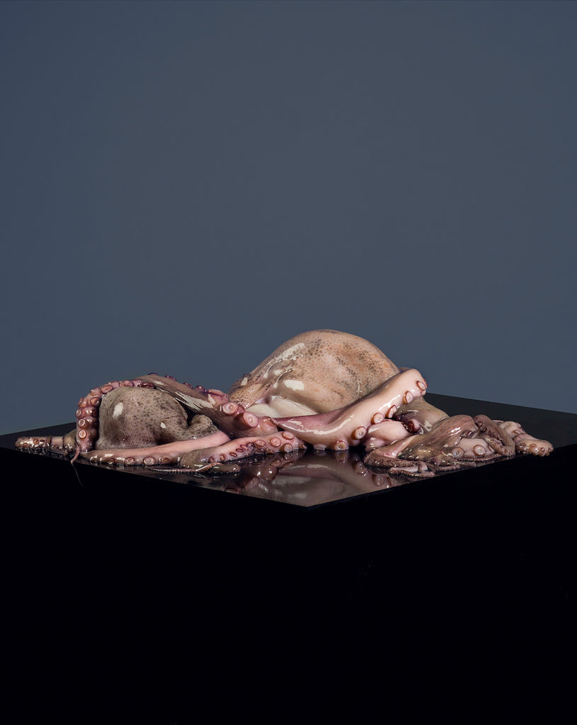 "Eva Jova ""Remains, The Octopus"""