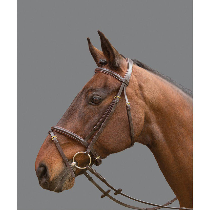 Mountain horse bridle