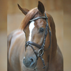 Bridle Angelo