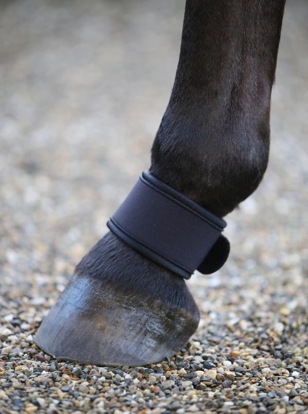 Pastern Protection
