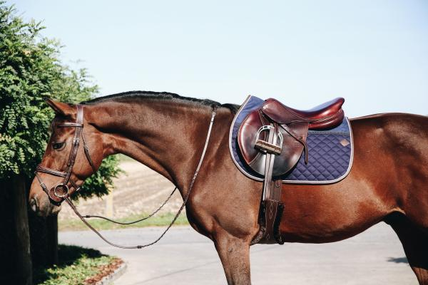 New Kentucky Saddle Pad