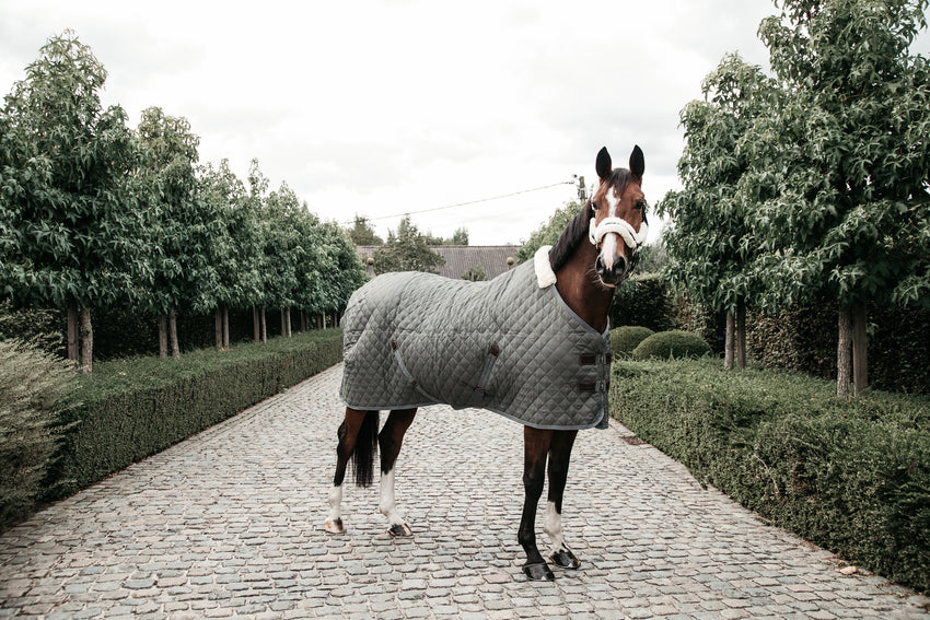 Best Winter Stable Rug