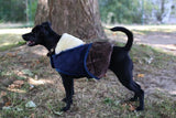 Kentucky Dog Coat