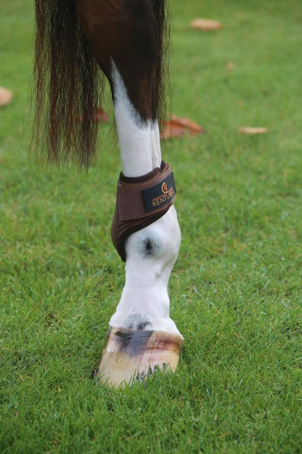 Young horse hind boots