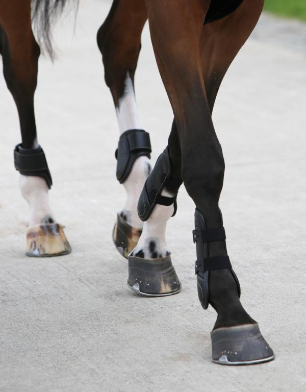 Leather Tendon and fetlock boots