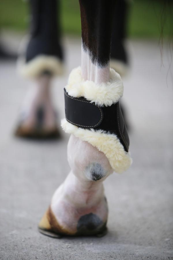 FEI Approved Young Horse sheepskin lined hind boots