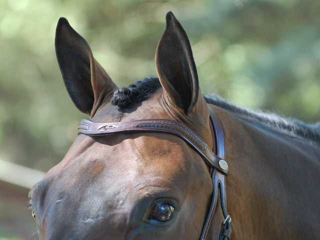 Laced Browband