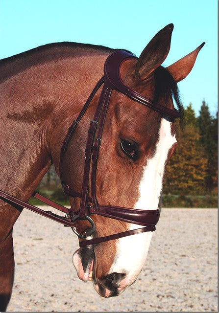 Dy'on Difference Dressage Bridle