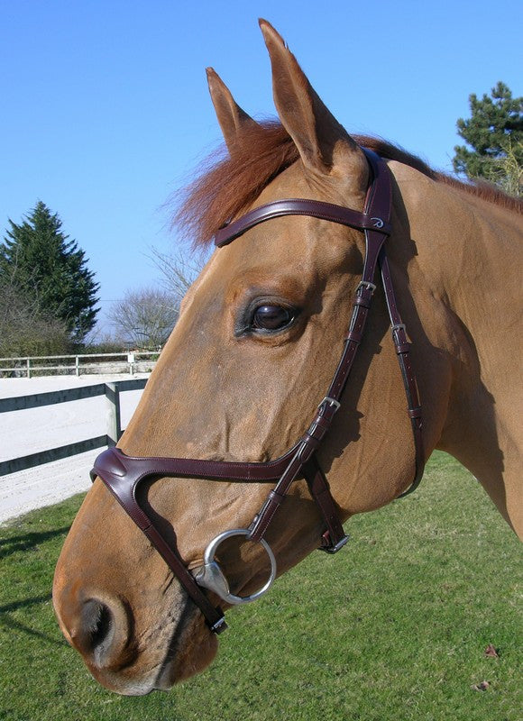 Dy'on X Fit bridle