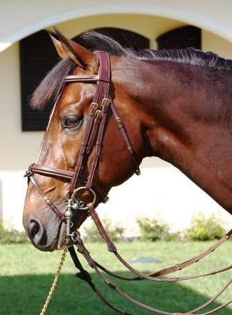 Double Bridle with Flash