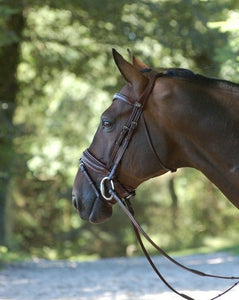 Brown Dressage Bridle