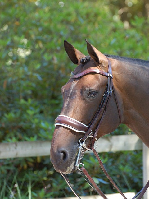 Brown Double Bridle