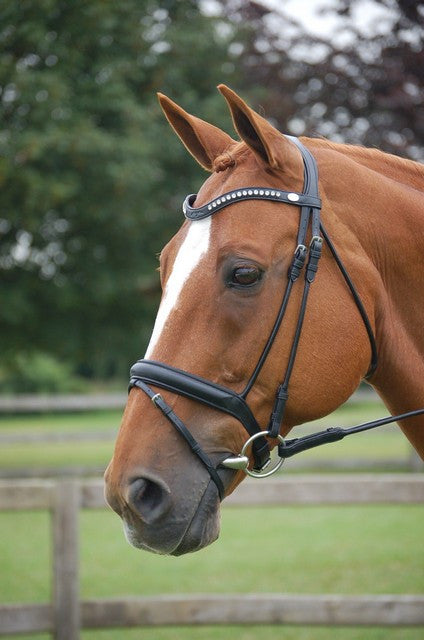 Rolled English Leather Dressage Bridle