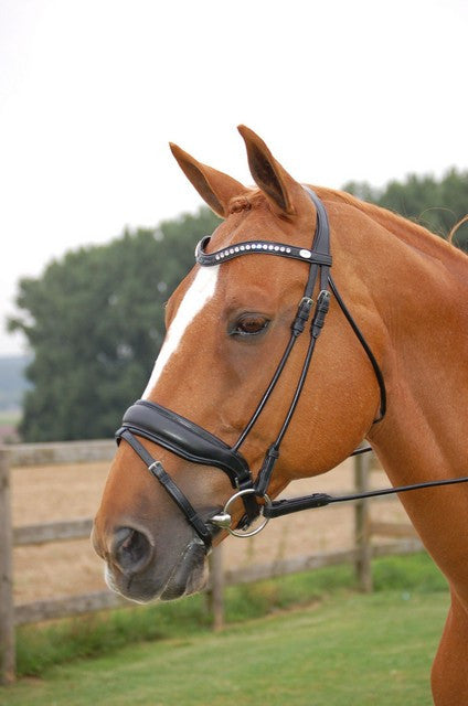 Dyon Rolled English Leather Bridle