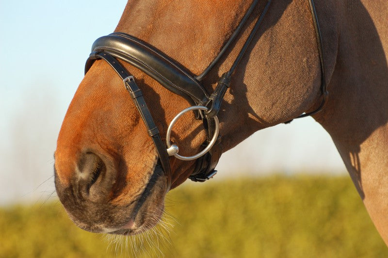 Dressage Bridle with Crank Noseband