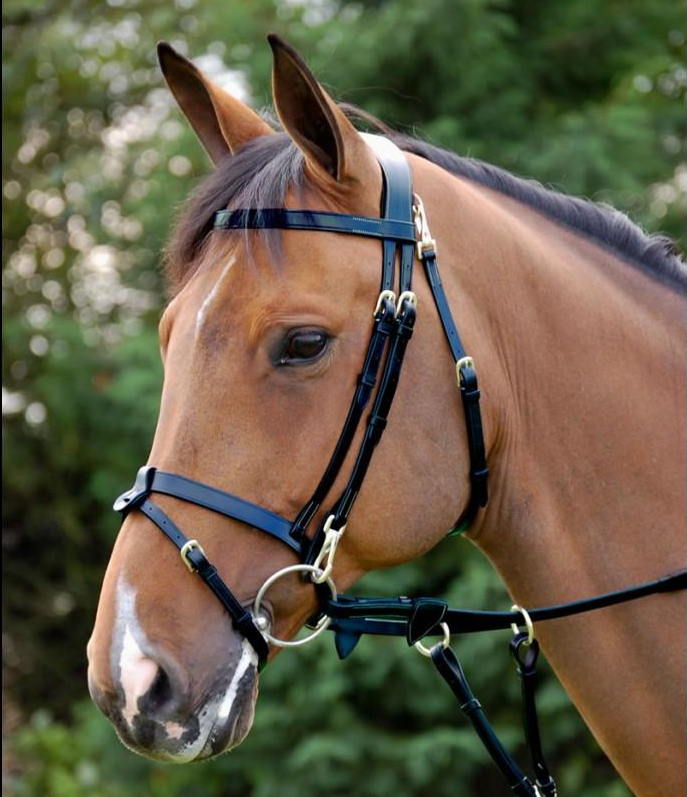 Dy'on bridle with flat noseband