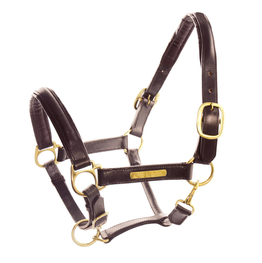 Leather Halter with Brass Name Plates