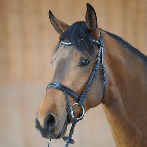 Open Flash Noseband Bridle