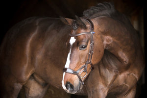 PS of Sweden Pioneer Bridle Online