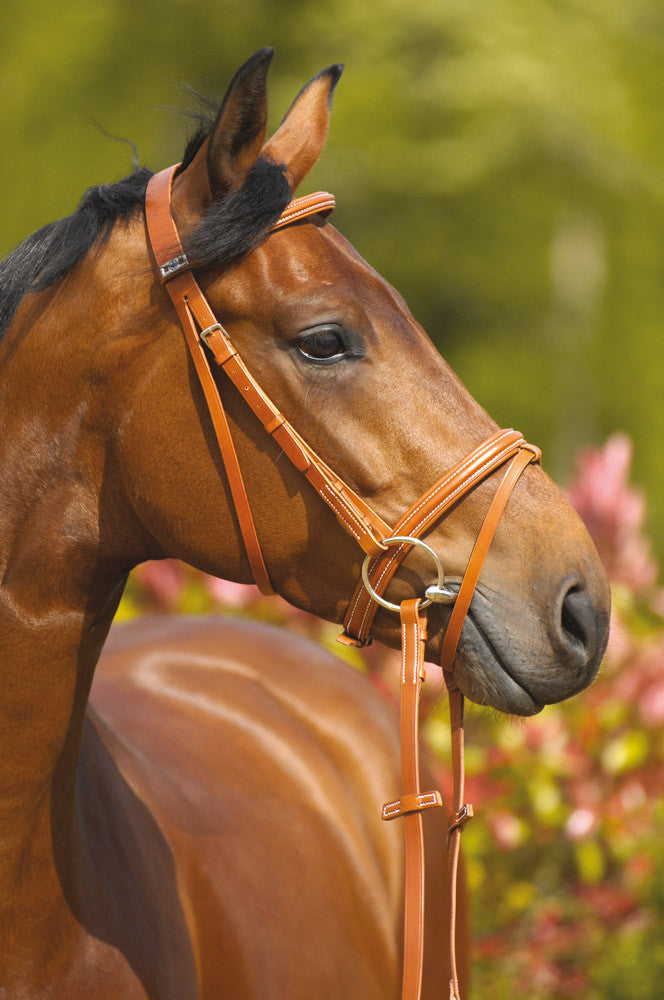 Wexford Bridle