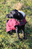 Burgundy Dog Coat