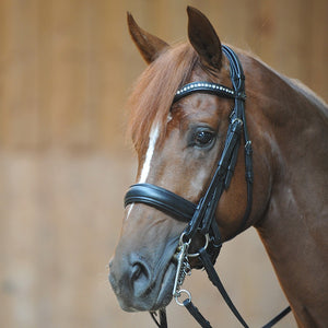 Pony Double Bridle