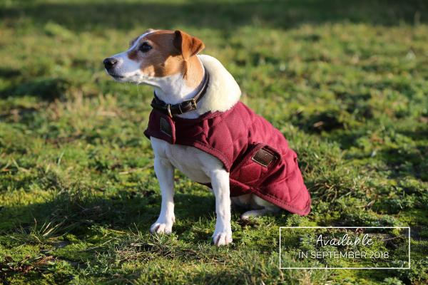 Kentucky Horsewear Dog Coat